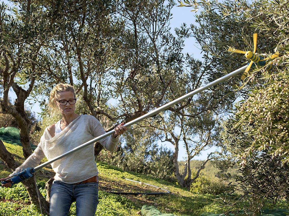 Fru Timian plukker oliven 2