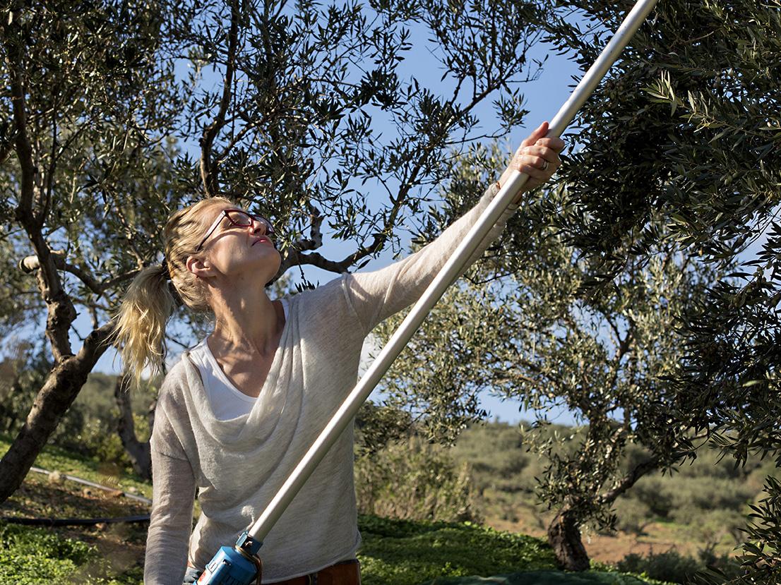 Fru Timian plukker oliven
