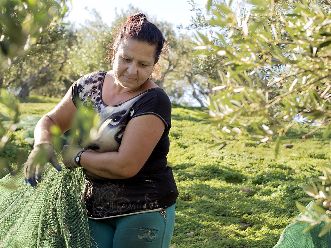 olivenplukking med GAEA