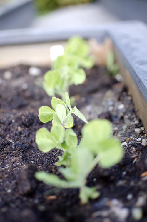 Det gror i og utenfor drivhuset