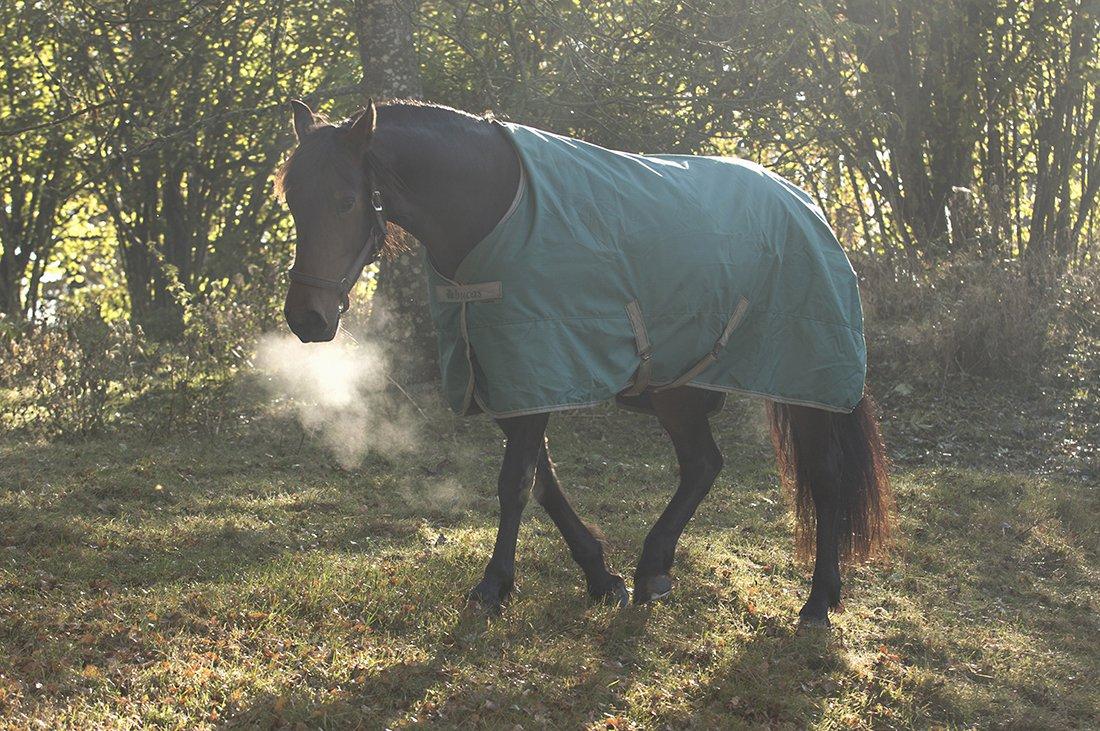 Hest hos Holmsen