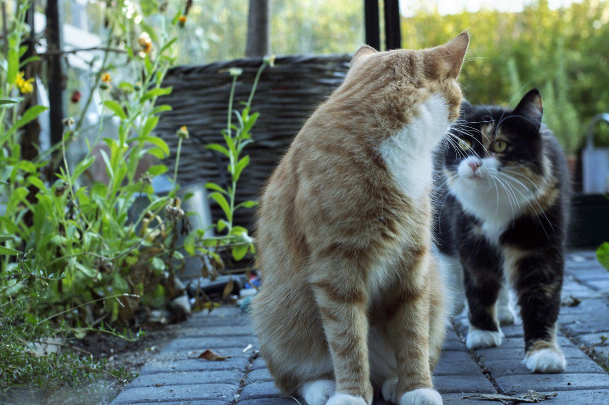 to søte katter